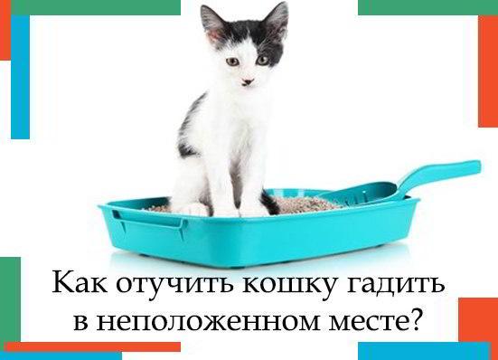 Кот гадит в неположенном месте: причины и методы борьбы