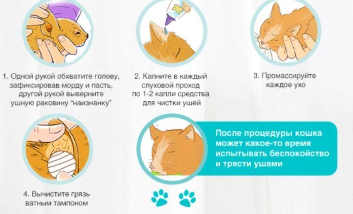 Как чистить уши собаке в домашних условиях
