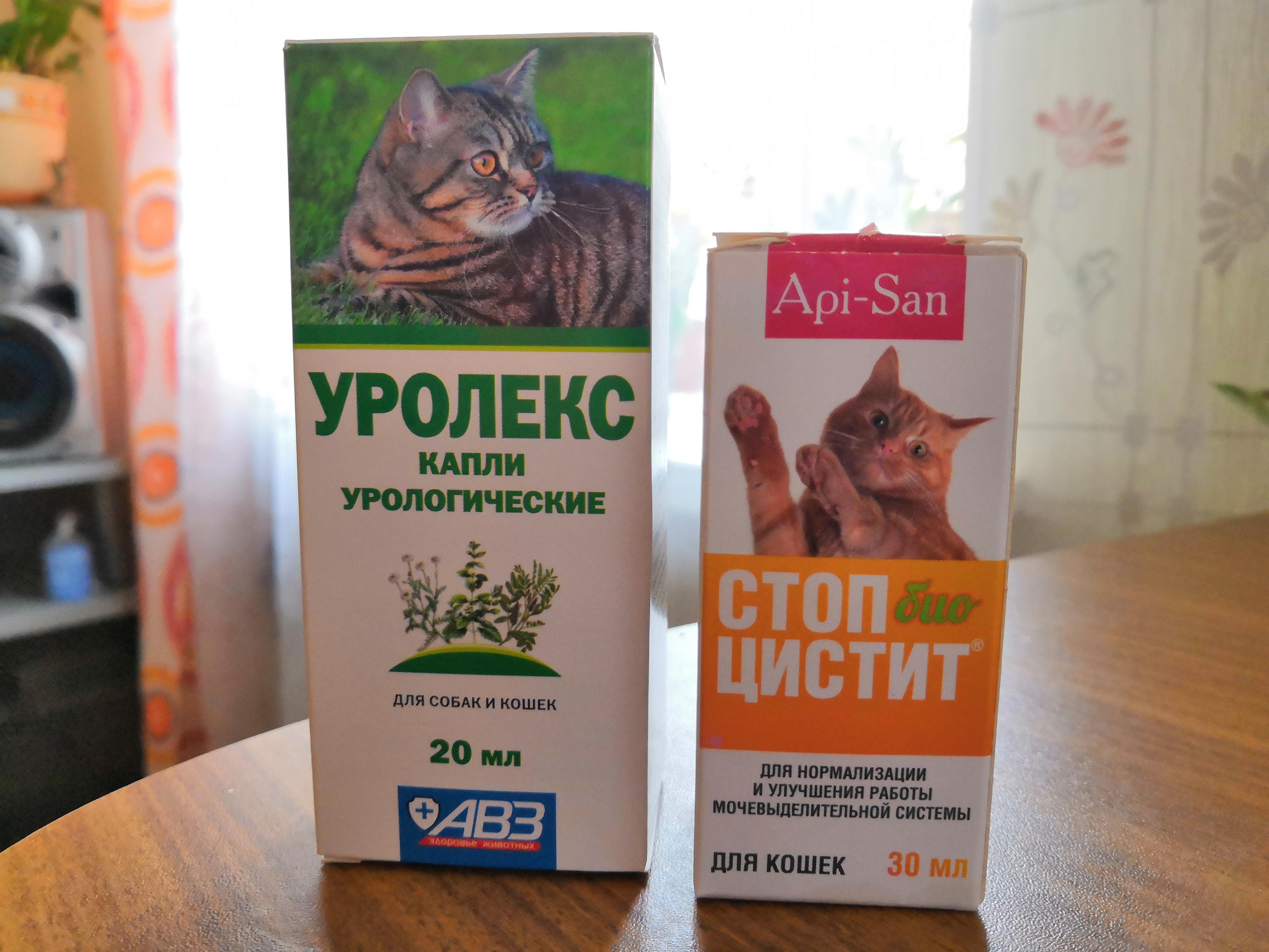 Цистит у кота: симптомы и лечение в домашних условиях