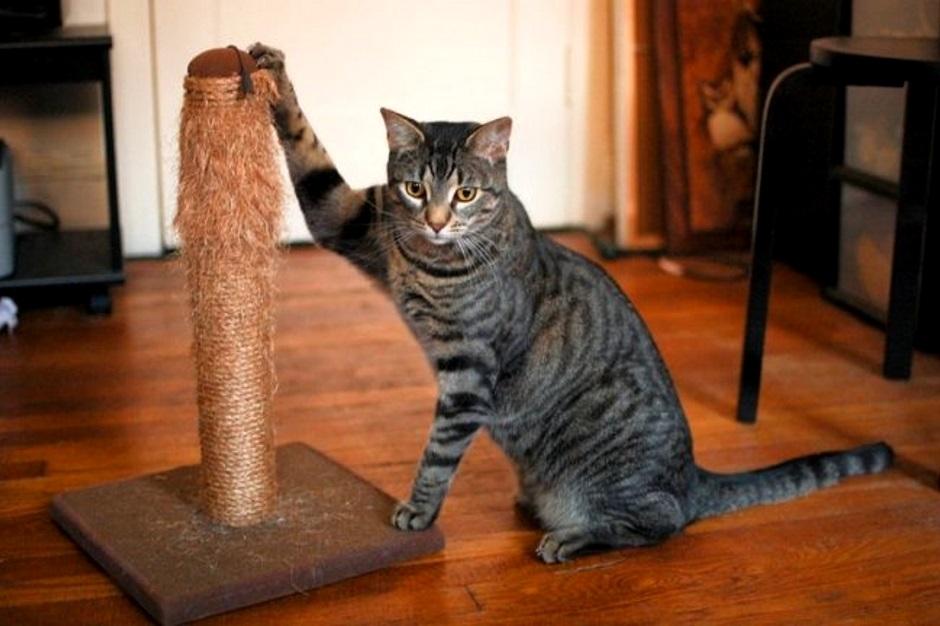 Как отучить кота драть мебель, диваны, обои