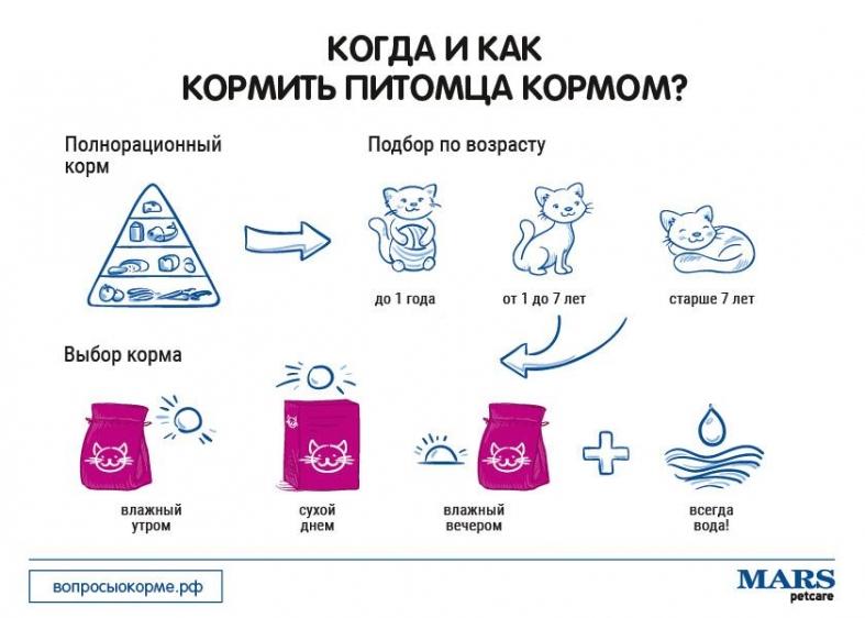 Как правильно переводить кошку на сухой корм?