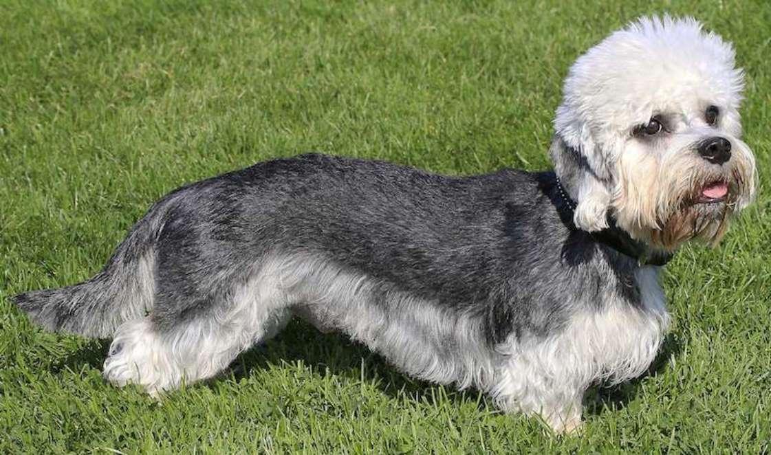 Собака с короткими лапами и большими ушами: список пород