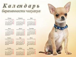 Беременность собаки по дням: подробно, таблица