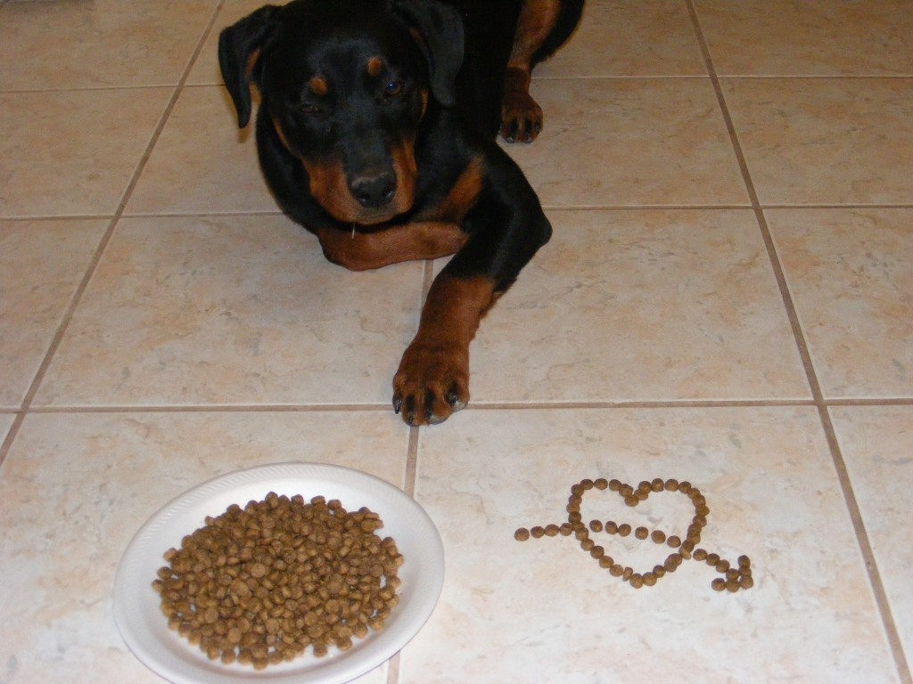 Почему собака ест свой кал: что делать и как отучить