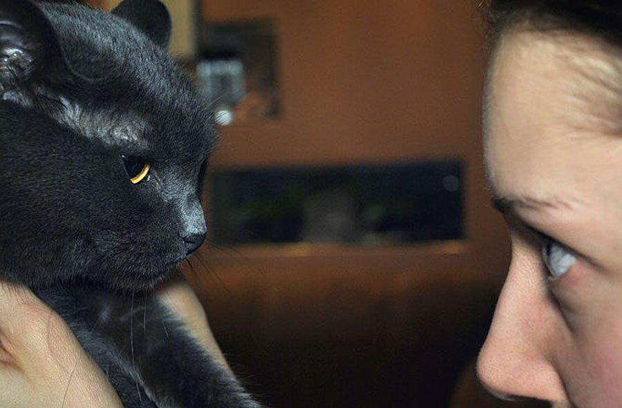 Коты дерутся: основные причины поведения и что можно сделать для отучения