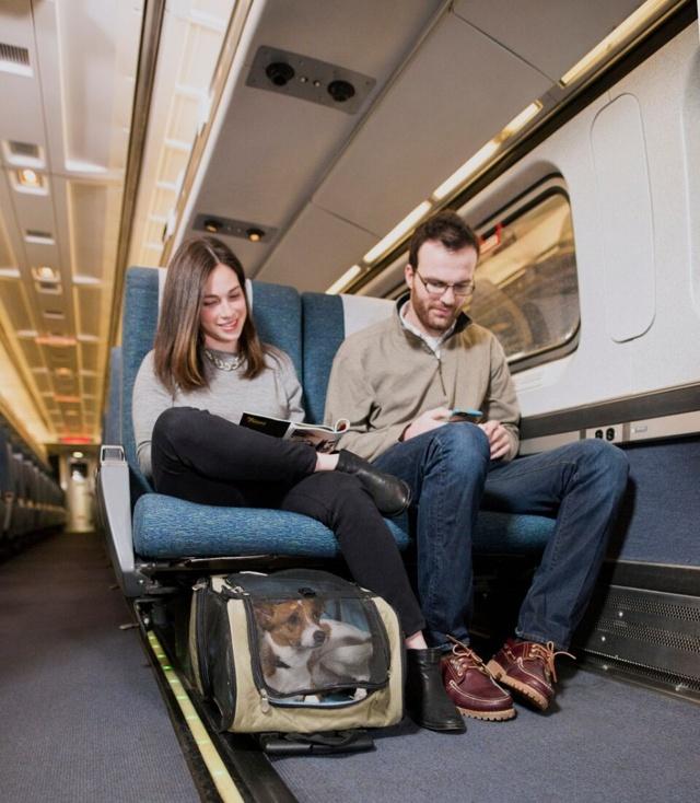 Как перевозить кошку в поезде: правила РЖД