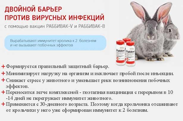 Вакцинация кроликов: какие и когда делать