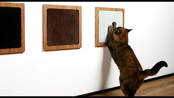 Как отучить кота драть обои и мебель: причины и решение проблемы