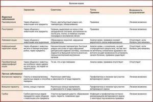 Гепатит у кошек: симптомы и лечение, прогноз