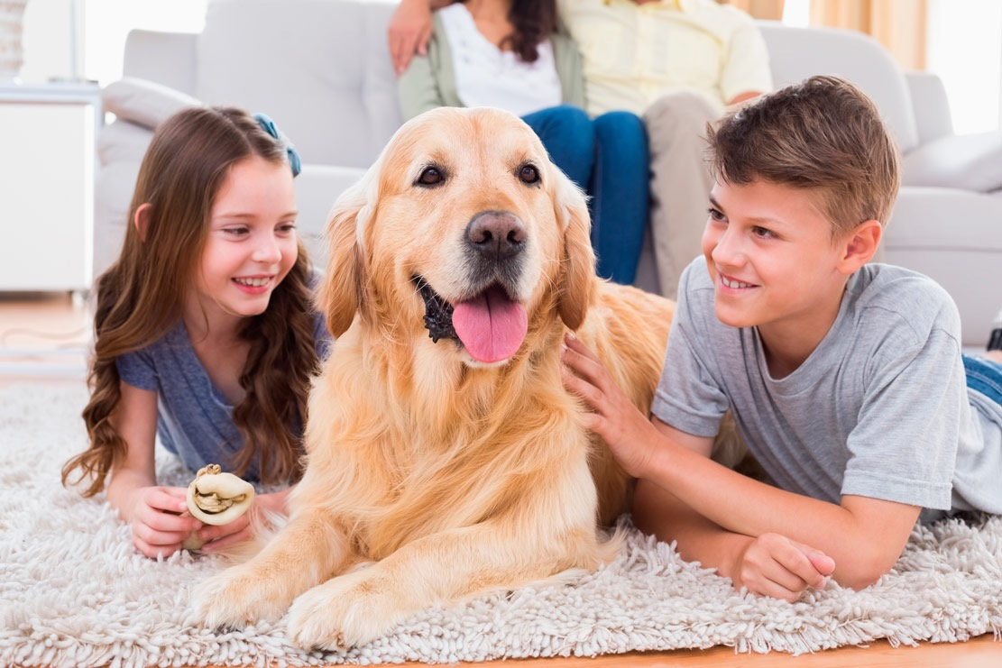 Собака для семьи с детьми: какую породу выбрать