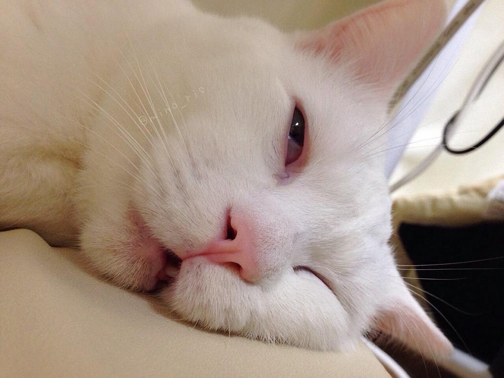 Почему кошки много спят: основные причины и нормально ли это