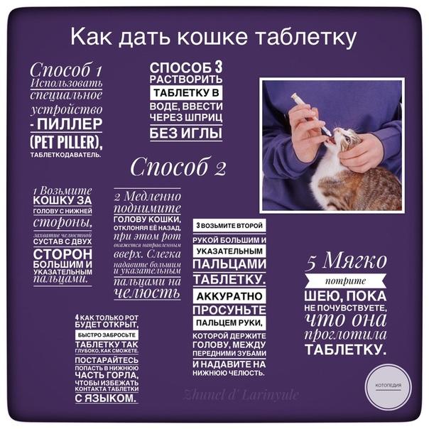 3 способа правильно дать таблетку котенку