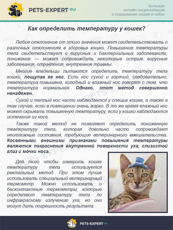 Сухой нос у кошки: основные причины и что это значит