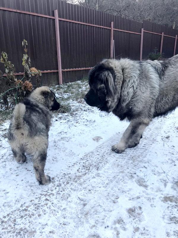 Как приучить собаку к поводку и ошейнику
