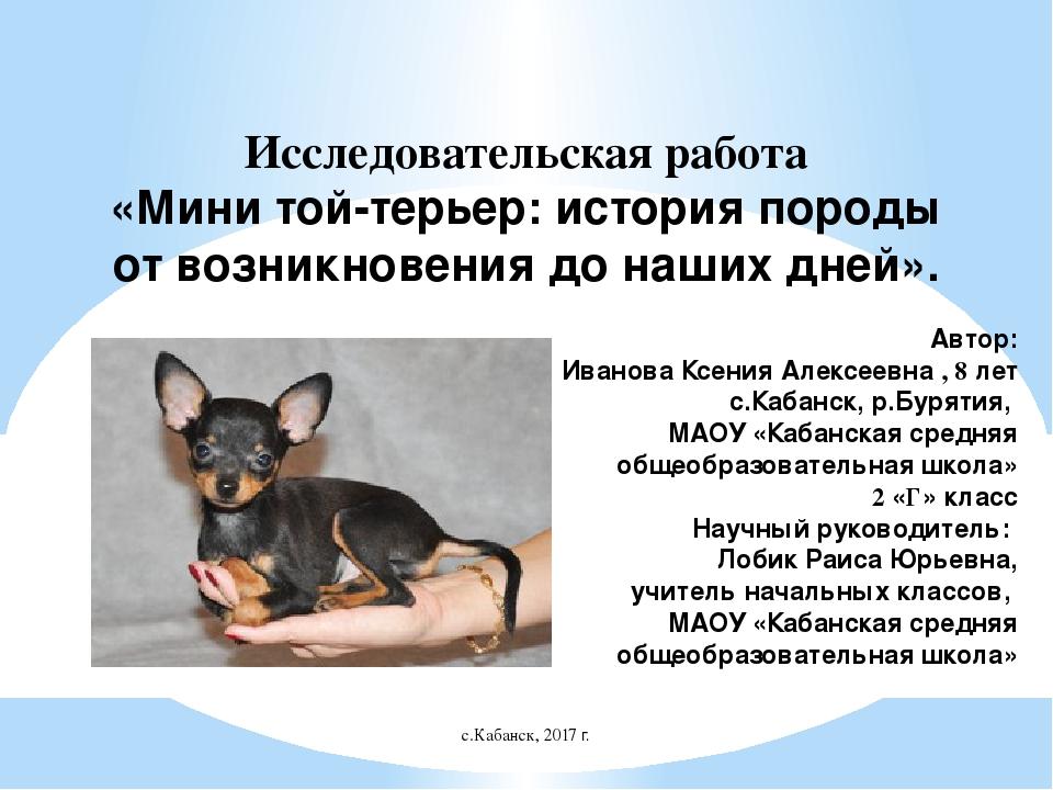 Английский той-терьер: описание породы собак