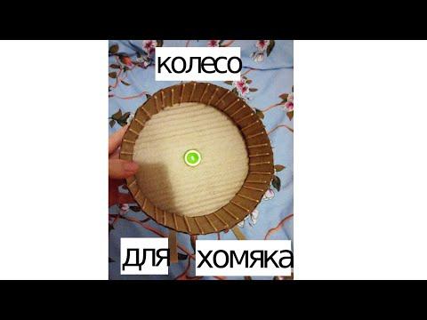 Колесо для хомяка своими руками — пошаговая инструкция