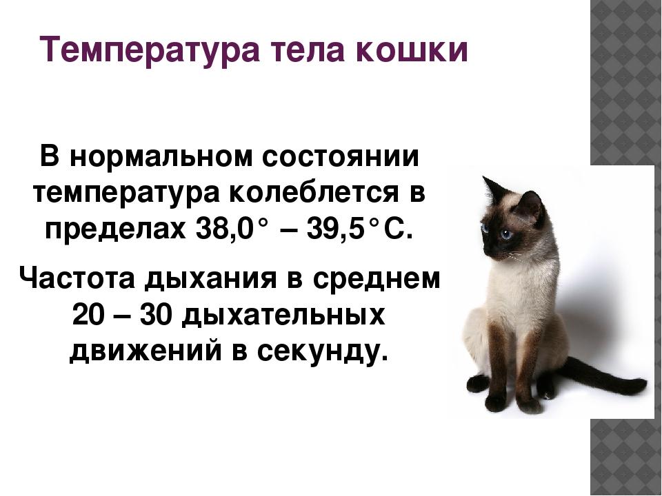 Температура тела у кошек