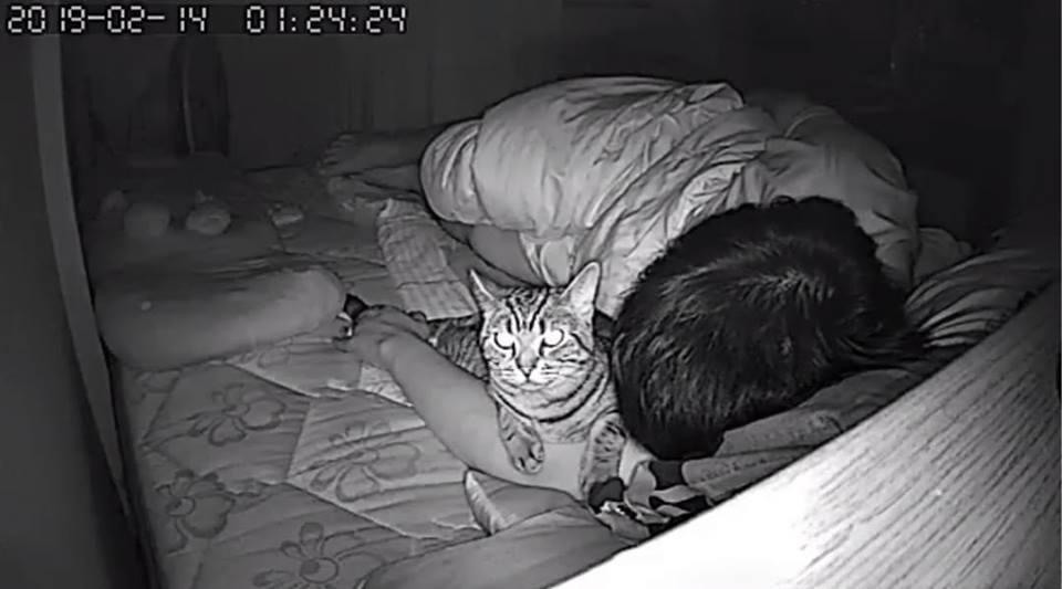 Охраняют во сне: почему коты спят у головы хозяина