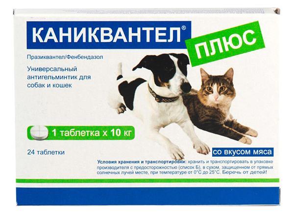 Борьба с гельминтами: обзор ветеринарного препарата Каниквантел Плюс
