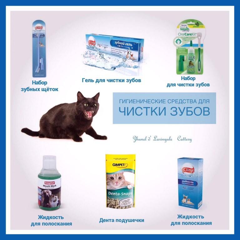 Как почистить зубы коту: варианты в домашних условиях
