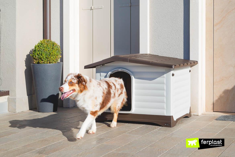 Как приучить собаку к будке во дворе из квартиры