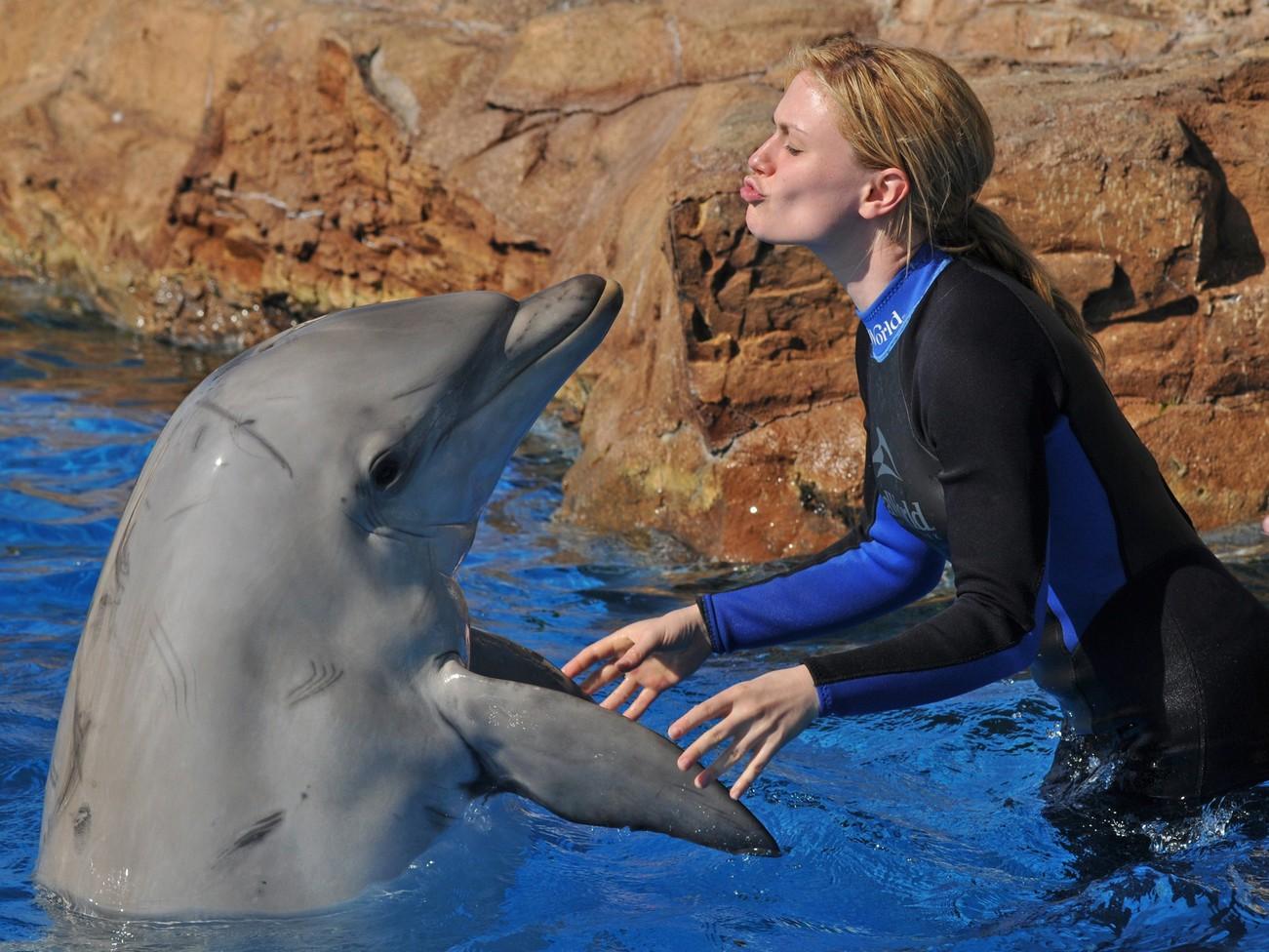 Почему язык дельфинов круче человеческого?