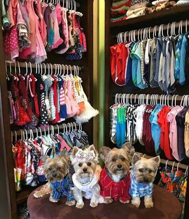Для чего собакам покупают одежду