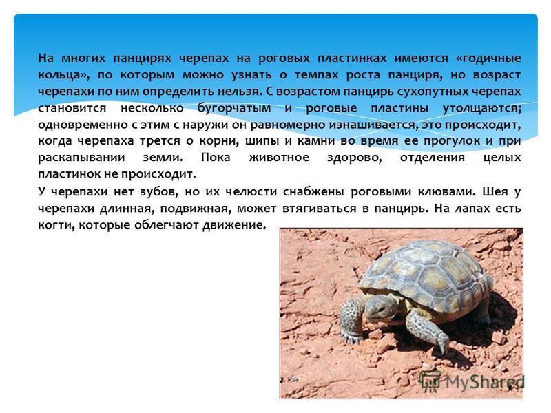 Сколько живут черепахи: продолжительность жизни водных и сухопутных