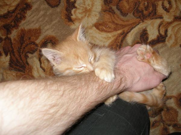 Как избавить котёнка от привычки кусать и царапать своих владельцев
