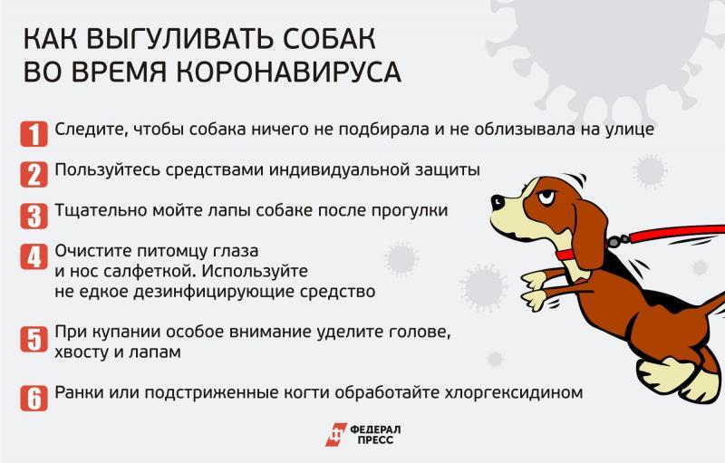 Выгул собак: сколько раз в день нужно гулять по времени