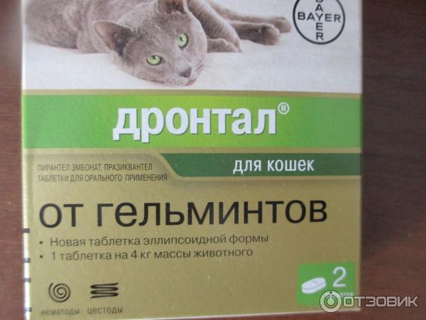 Каниквантел для кошек: инструкция по применению