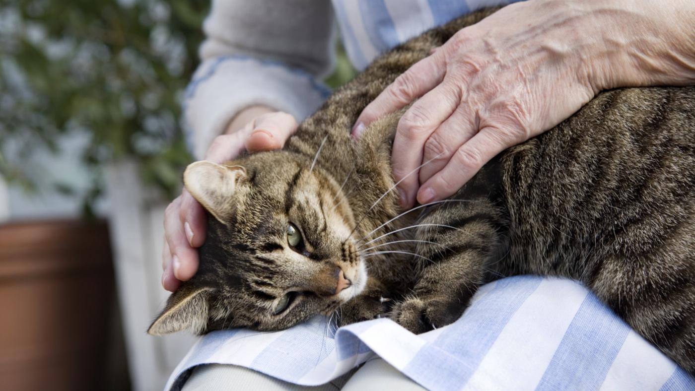 Любовь кошек и людей укрепляет здоровье