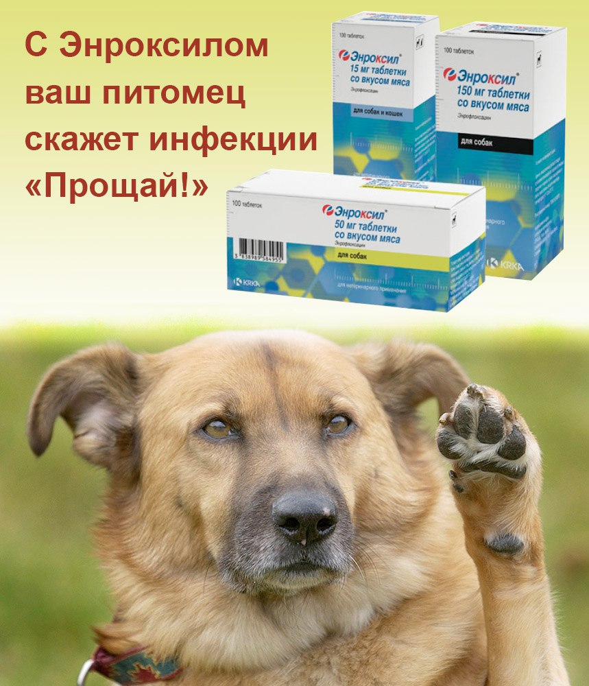 Энроксил для собак