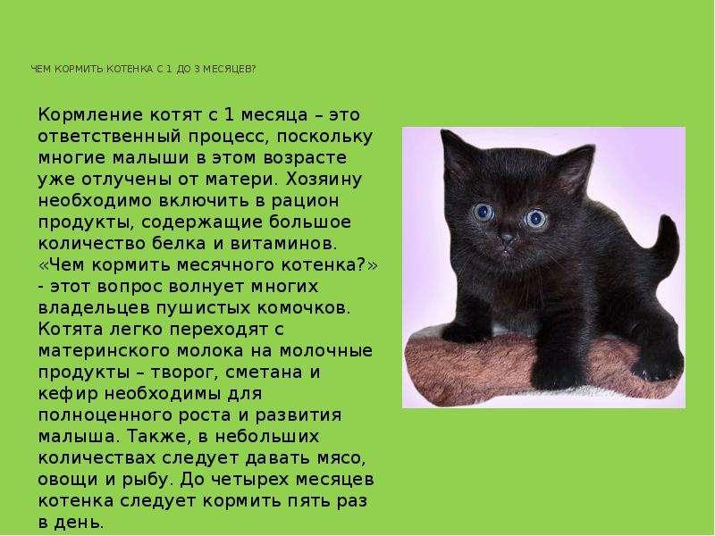 Чем кормить котят в возрасте 1-1,5 месяца