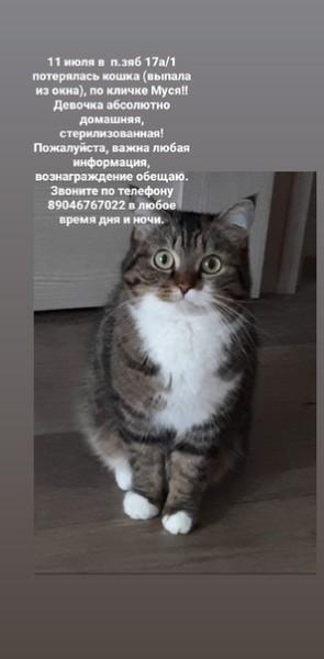 Приметы с кошками: основные примеры популярных суеверий