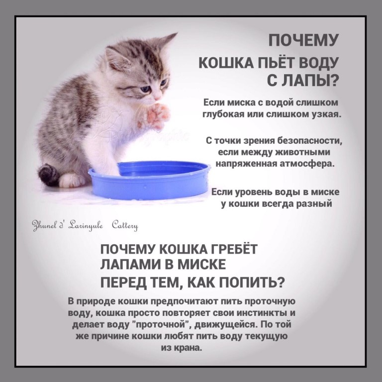 Кот не пьет воду вообще: что делать, почему