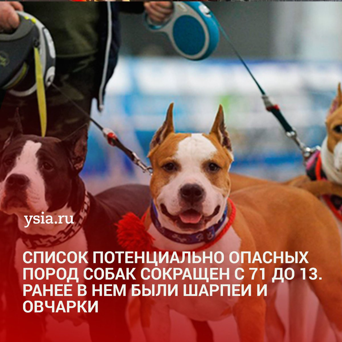 Список опасных пород собак, принятый госдумой
