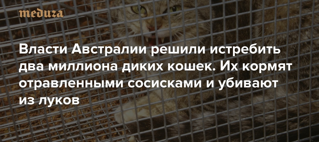 Похожи ли кошки на людей?