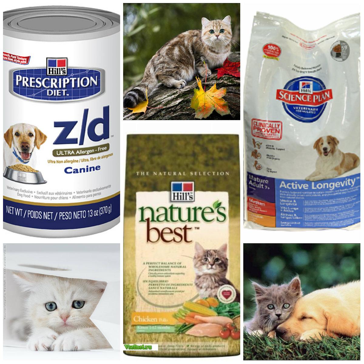 Лечебные корма для кошек