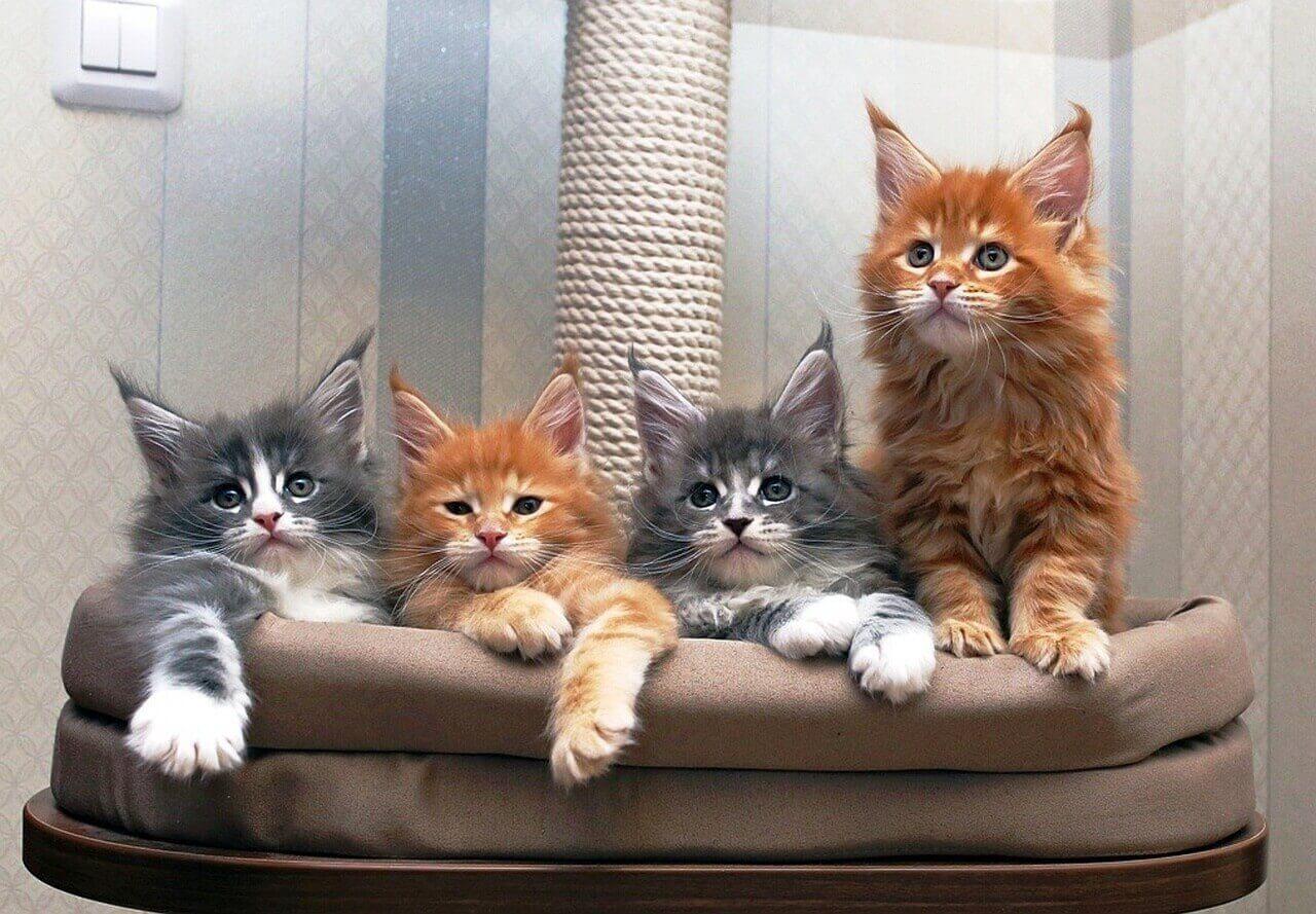 Какую породу кошек лучше выбрать для квартиры