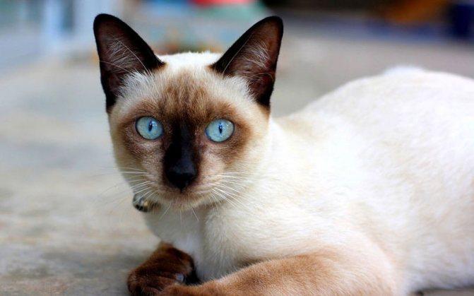 Какие человеческие антибиотики можно давать кошкам