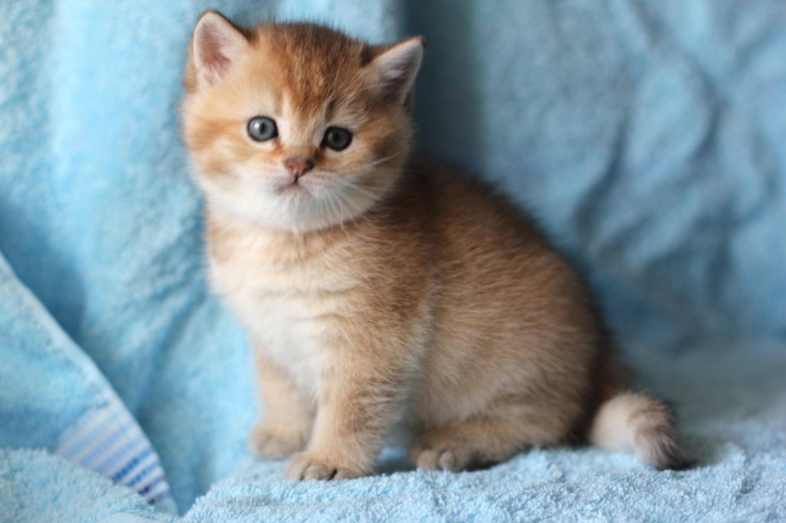 Как назвать рыжего кота: оригинальные примеры кличек