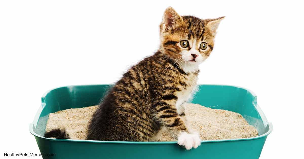 Запор у кошки или кота: что делать?