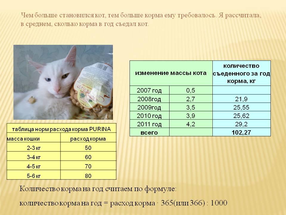 Особенности кормления котёнка в 2, 3 и 4 месяца