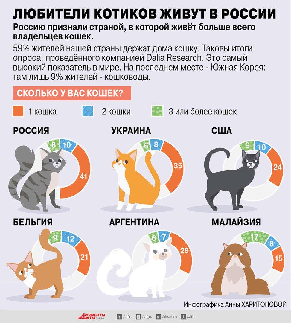 Сколько на самом деле могут прожить собаки