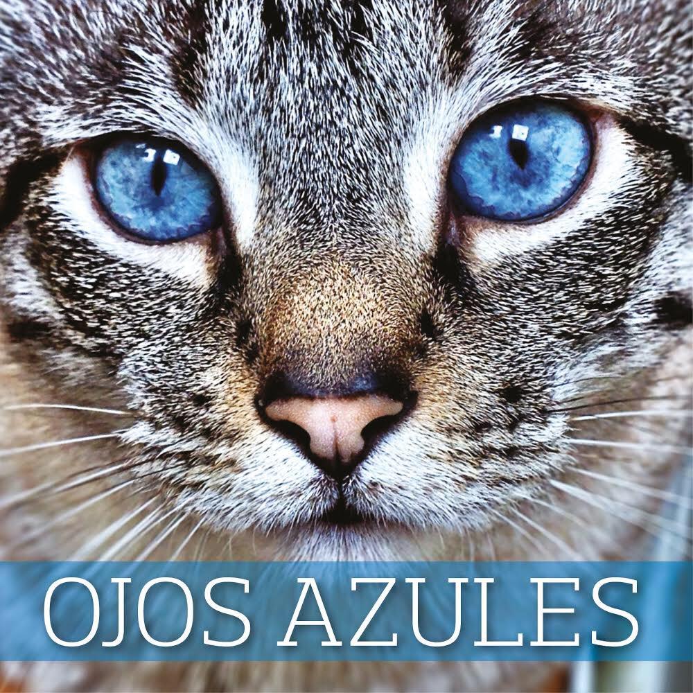 Охос Азулес (голубоглазка)