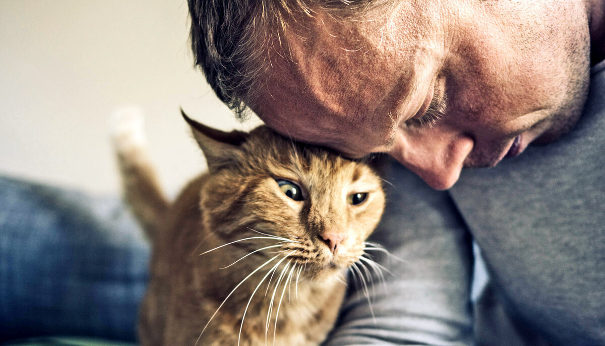 Почему некоторые кошки «разговорчивы» с хозяевами, а некоторые молчаливы