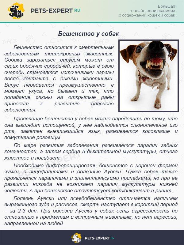Собака плохо ест, но активная: причины и что делать