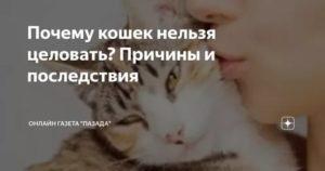 Почему нельзя обнимать и целовать кошек