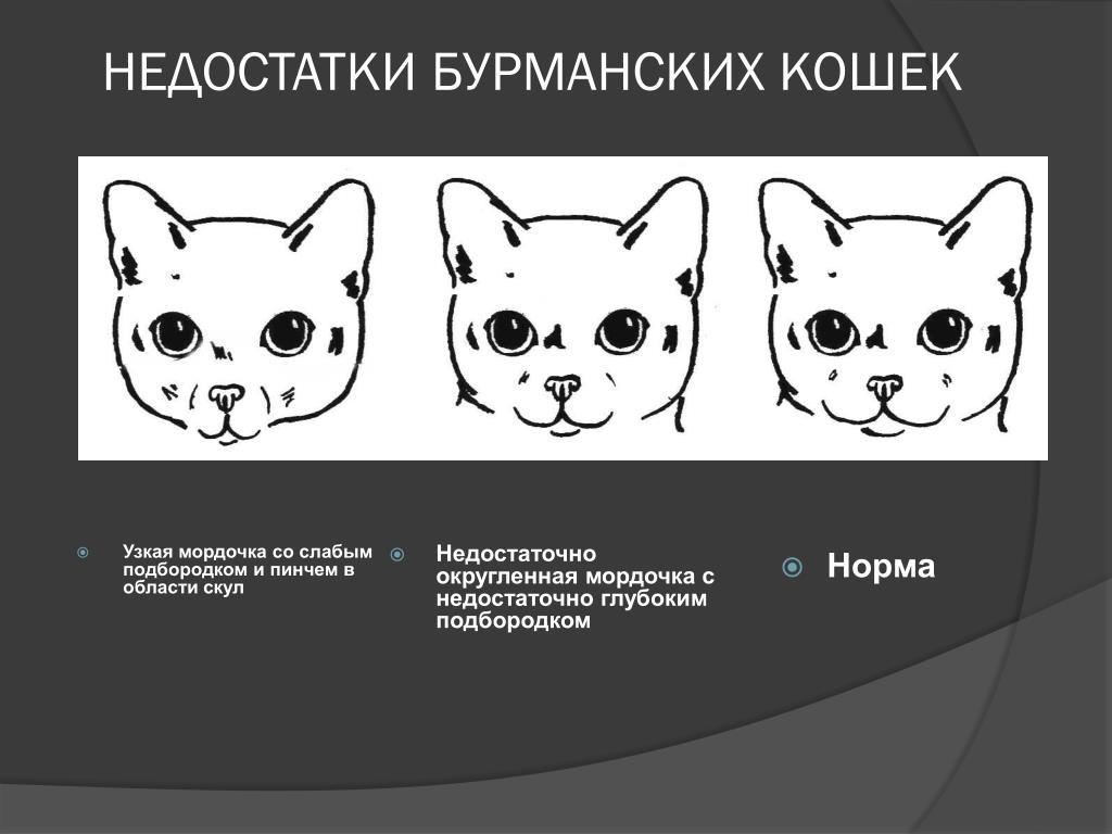 Как отличить кота от кошки по морде: различия